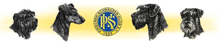 Pinscher schnauzer klub